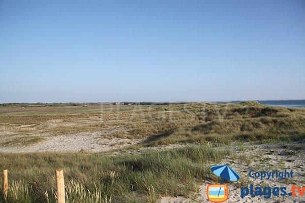 Végétation et dunes de la plage de Kermabec à Tréguennec
