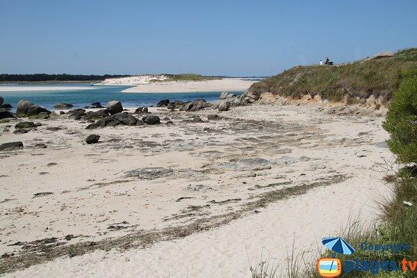 Laisse de mer sur la plage de Kernic - Finistère