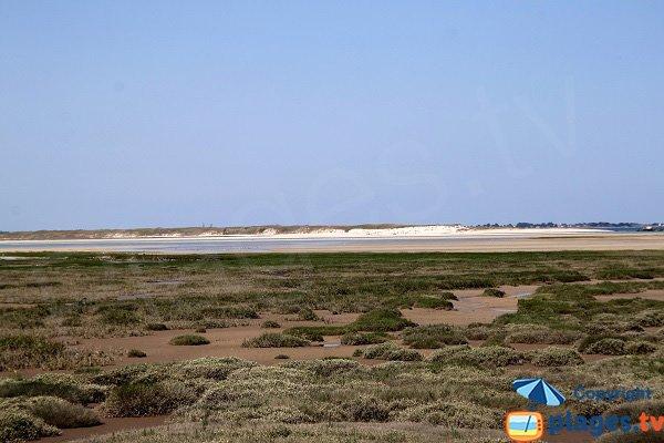 Marais dans la baie de Kernic