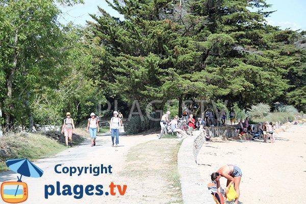 Promenade le long de la plage de Keroland - ile d'Arz