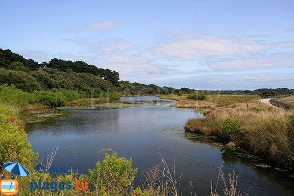 Marais de la plage de Kerner en Bretagne - Arzon - St Gildas