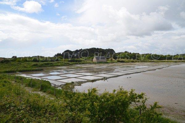 Marais Salants de Kervillen - La Trinité sur Mer