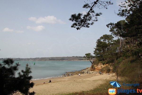 Végétation sur la plage de Kirio au niveau de la pointe de Dourven