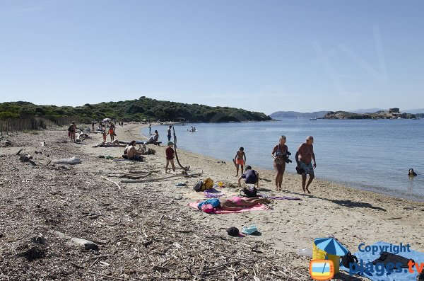 Langoustier beach and island - Porquerolles