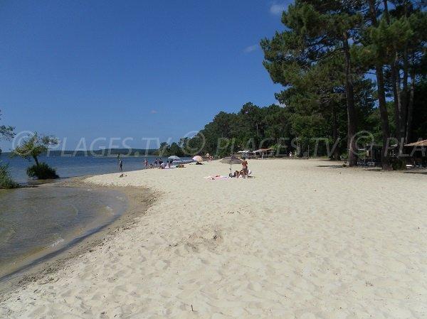 Photo de la plage Laouga au lac de Cazaux