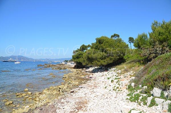 South cove in Sainte Marguerite island (Laoute) - Lerins island