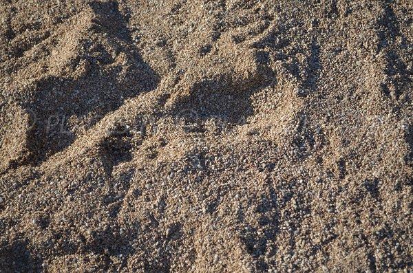 Gravillon très fin avec du sable sur la plage de Monaco
