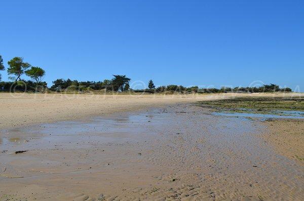 Lauzin beach at low tide - Ré island