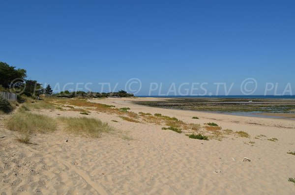 Photo of Lauzin beach - Les Portes en Ré
