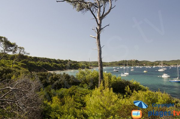 Photo della spiaggia del Lequin a Porquerolles - Francia