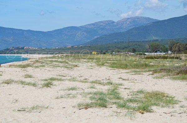 Beach of Liamone in Corsica