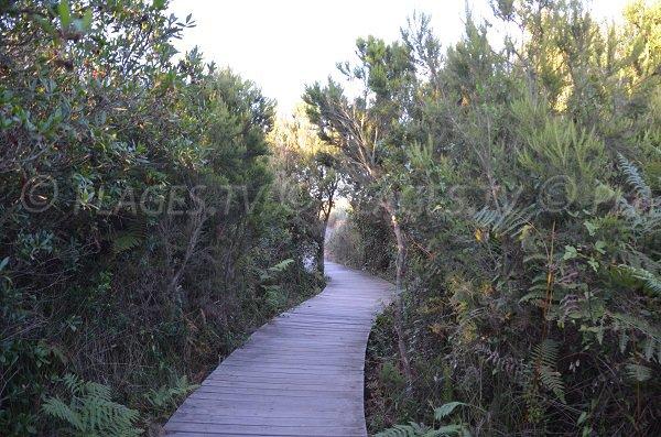 Sentier dans la réserve de la Marana à Borgo