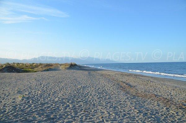 Photo de la plage du Lido de la Marana à Borgo