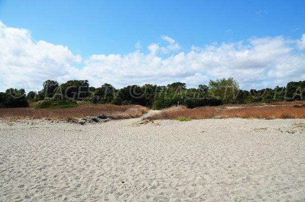Environment Beach of Linguizzetta