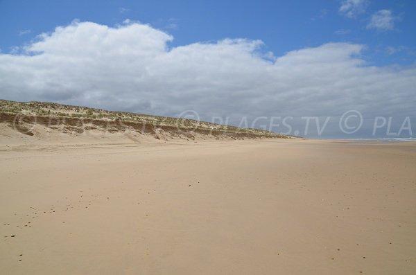 Dunes de la plage du Lion à Lacanau