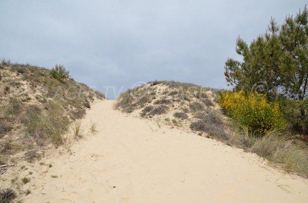 Accès à la plage du Lion à Lacanau