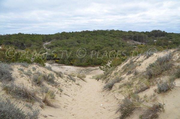 Sentier d'accès à la plage du Lion à Lacanau
