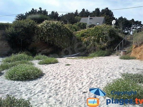 Végétation sur la plage de Locmaria sur l'ile de Groix