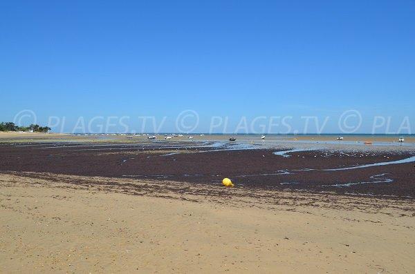 Baignade sur la plage de la Loge à marée basse - Portes en Ré
