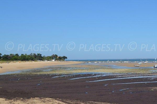 Photo de la plage de la Loge - Les Portes en Ré