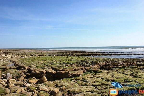 Pêche à pied sur les plages de Jard sur Mer