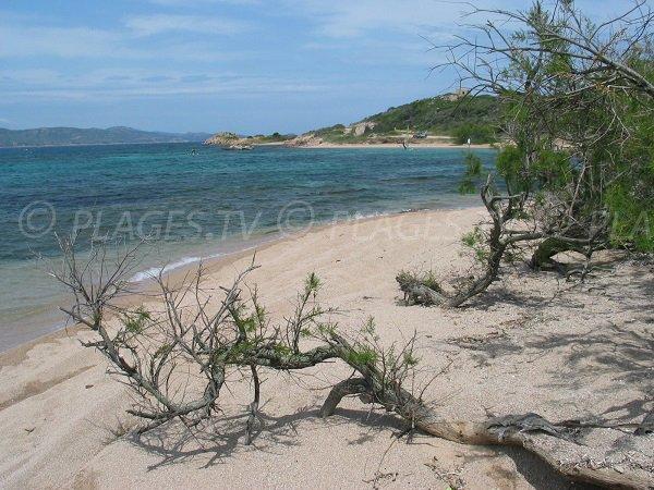 Plage de Maora dans le golfe de Sant'Amanza à Bonifacio