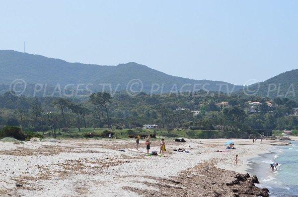 Arrière plan de la plage d'Argent à Pietrosella en Corse