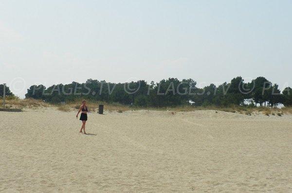 Wild beach in Argelès sur Mer