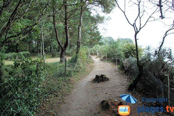 Sentier d'accès à la crique de Mec'hed Yaouank - Fouesnant