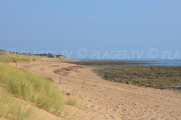 Photo de la plage de la Ménounière à Oléron