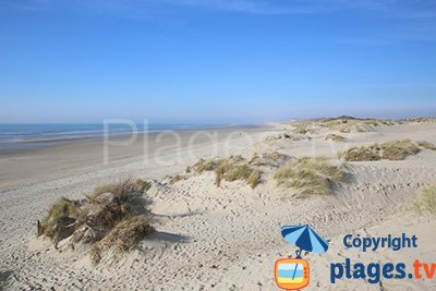 Plage sauvage à Merlimont dans les dunes