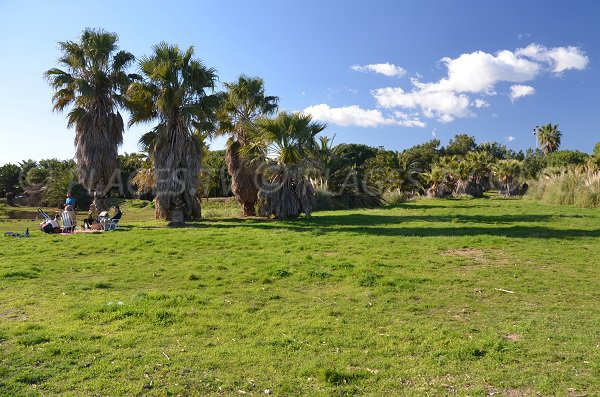 Pelouse sur la plage de Mérou avec palmiers