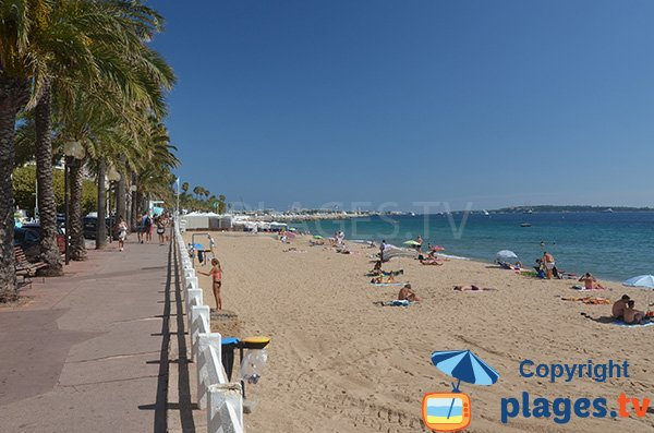 Photo of the Midi beach in Cannes and view on the Lerins islands