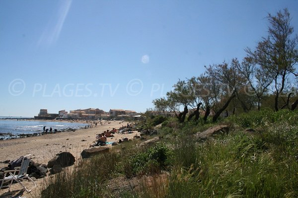Environnement de la plage du Mole au Cap d'Agde