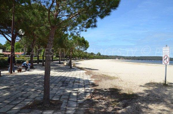 Promenade piétonne le long de la plage de Montaut au lac de Carcans