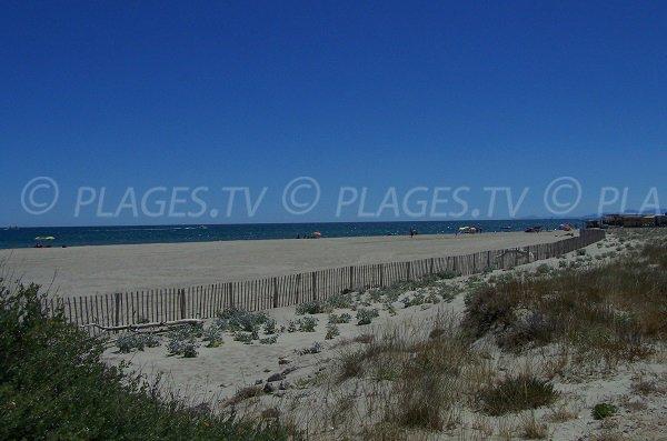 Environnement de la plage du Mouret - Leucate - 11