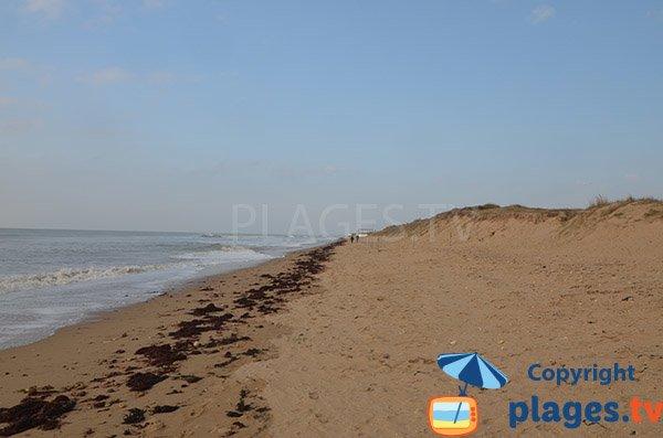 Dune della spiaggia del Murier - Notre Dame de Monts