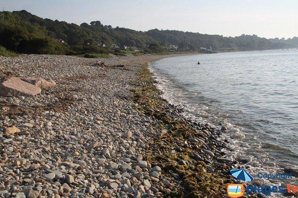 Algues vertes sur la plage de Nantouar à Louannec