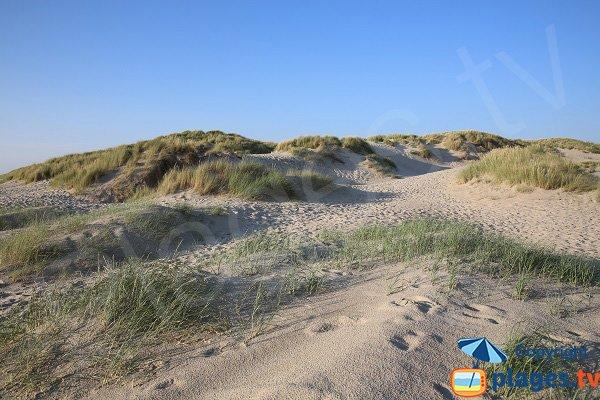 Dunes of the naturist beach in Berck sur Mer