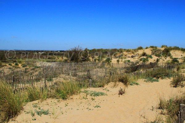 Environnement de la plage naturiste de Sérignan