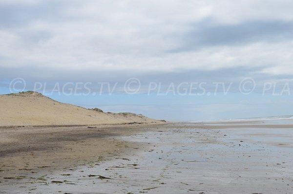 Dunes à Montalivet les Bains