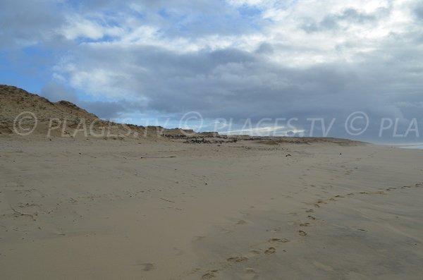 Dune della spiaggia di Soustons