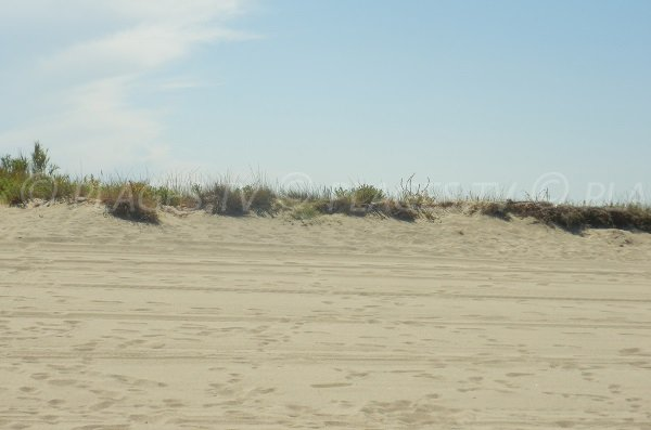 Dunes on Torreilles beach