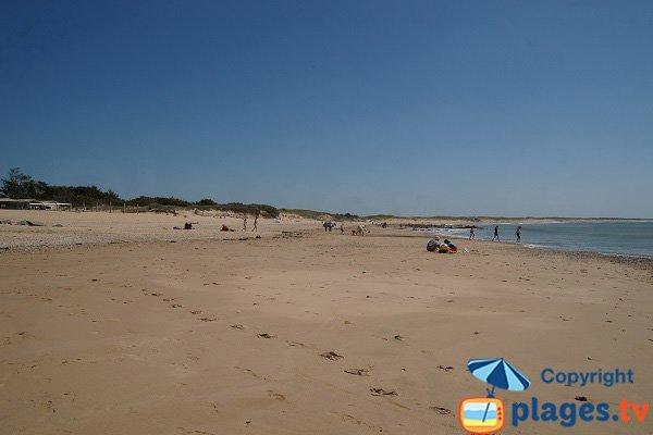 Dunes sur la plage de la Normandelière - Vendée - Brétignolles