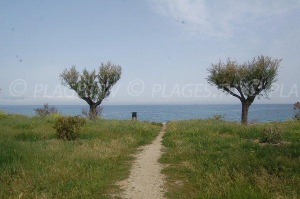 Environnement de la plage d'Olzo à Saint Florent