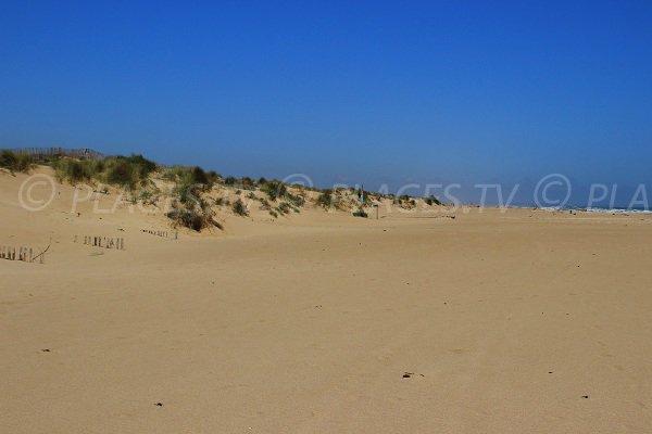 Dunes de la plage des Orpellières à Sérignan