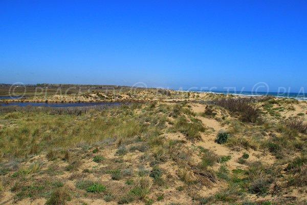 Réserve naturelle des Orpellières dans l'Hérault
