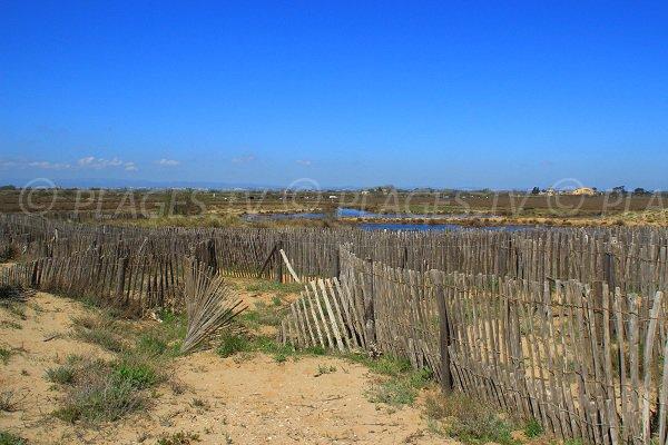 Environnement de la plage à l'ouest de Sérignan