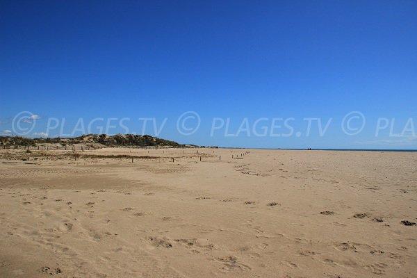 Dunes sur la plage Ouest de Portiragnes