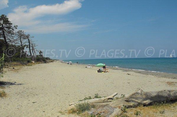 Photo de la plage de Padulone à Aléria - zone nord